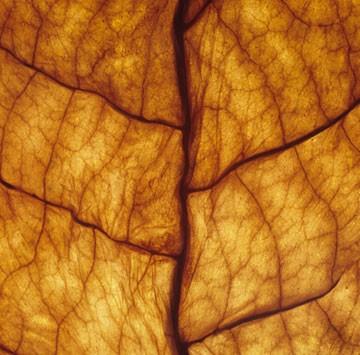 Tobacco Leaf NET Eliquid