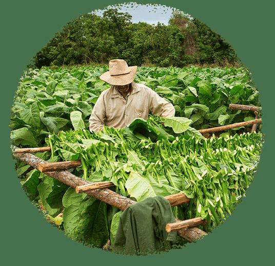 Tobacco E-Liquid | Authentic Tobacco Taste | Black Note